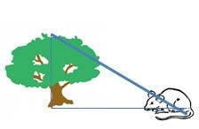 trig ratios real world problem 1 hawk in tree