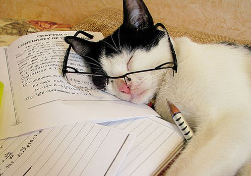 studying cat good study habits